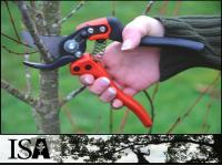 We offer the following services Pruning, trees, shrubs, shrub beds, overgrowth, thinning, topping, wood, branches, limbs, brush, stumps, chipping, grinding, sawing, shearing, hedge-trimming, shaping, clearing, hauling, bucket truck, high lift, tall trees, dead trees, diseased trees, bores, insects